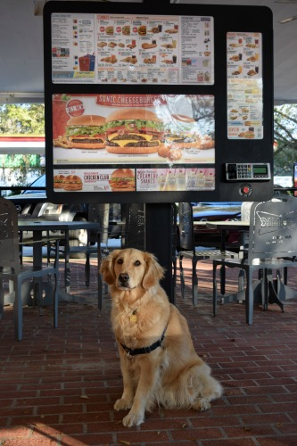 Honey the golden retriever in Sonic.