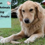 Can You Help Animals By Helping People? #BTC4A