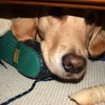 Does A Good Dog Make A Bad Blog?