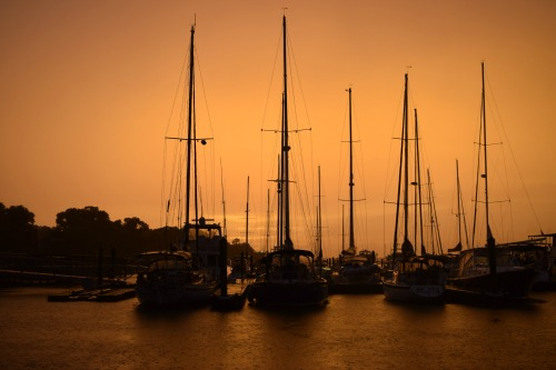 View of masts in orange sky.