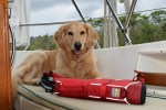 Honey the golden retriever takes off her life jacket at the end of a long day on the boat.