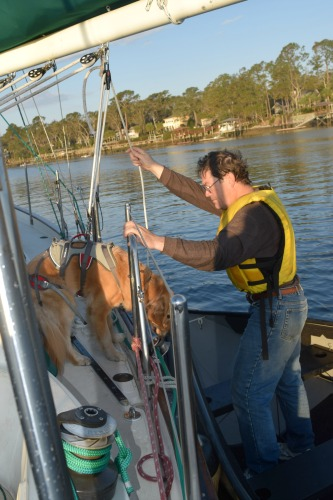 Honey the golden retriever is lowered over the side of Meander.