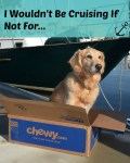 Honey the golden retriever wouldn't be cruising if not for Chewy.