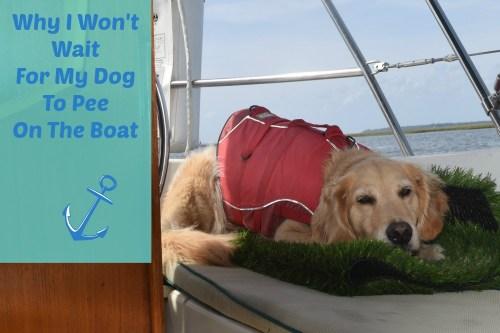 Why I won't wait for my dog to pee on the boat.