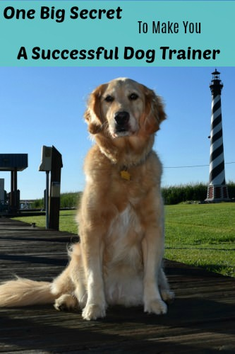 One Big Secret to Be a Successful Dog Trainer