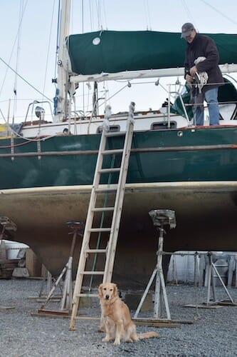 Honey the boat dog waits under Meander to be lifted on board.