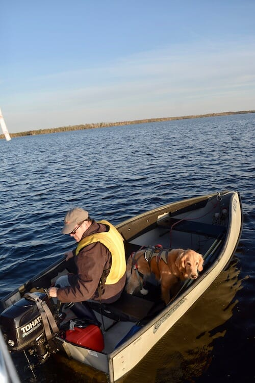 Honey the boat dog goes off in the dinghy for a walk.
