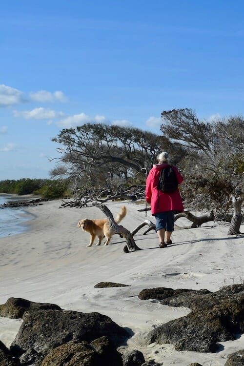 Honey the golden retriever and Pam walk on the beach at Fort Matanzas.