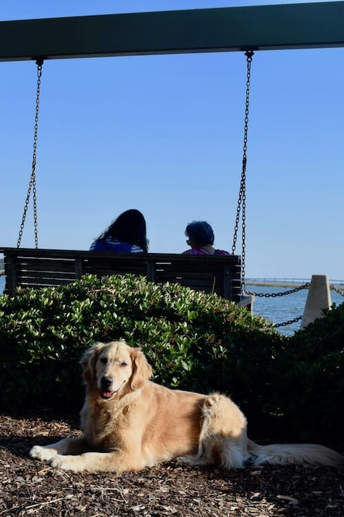 Honey the boat dog in the waterfront park in Beaufort, SC.