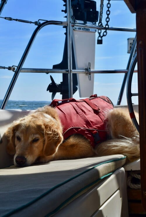 Honey the golden retriever sleeps in the cockpit in her life jacket.
