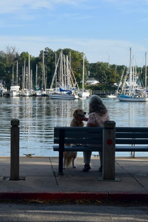 Honey the golden retriever puts her paws on the bench in Annapolis.