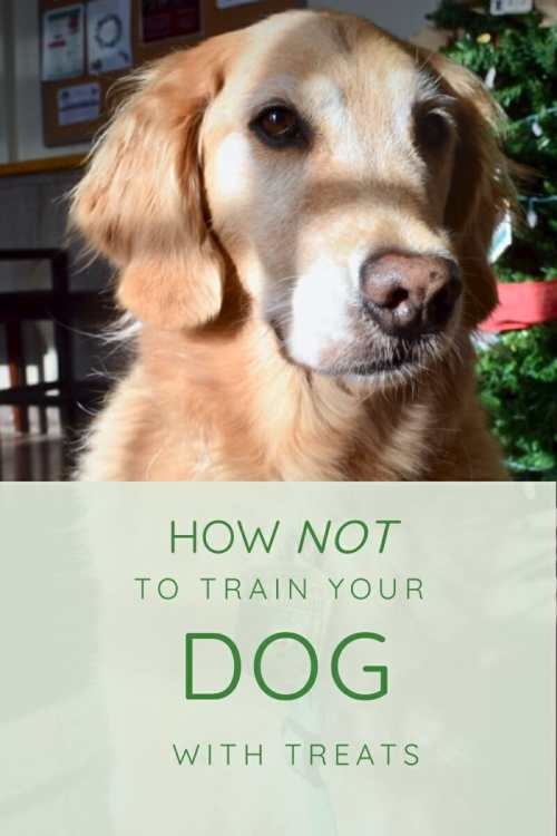 Learn about the wrong way to train your dog with treats (golden retriever in shadow).