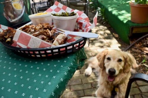 BBQ plate with golden retriever looking on from below.