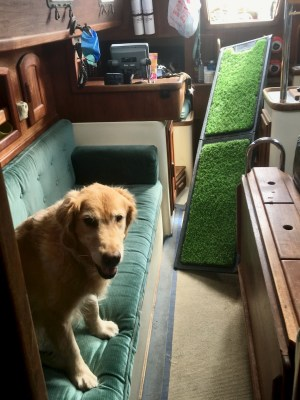 Make sure the dog ramp will fit where you want to use it - Golden retriever in boat cabin with crooked ramp leading into the opening.