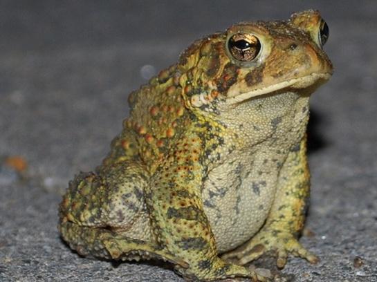 frogprince.jpg (545×408)