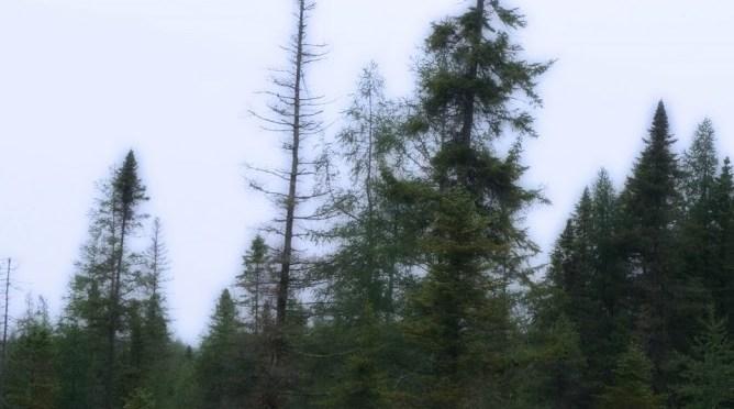 Bloomingdale Bog