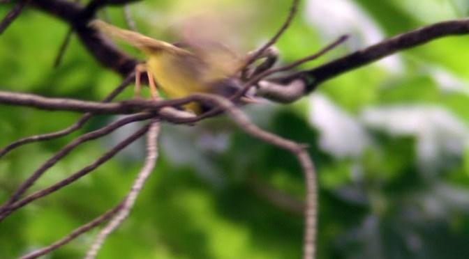 Bad bird photo of the week