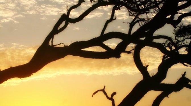 Skywatch Friday: Driftwood Beach Dawn