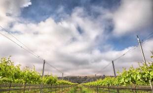Best Santa Barbara Wines and Grape Varieties Being Made | Laura Booras, Riverbench Vineyard and Winery | SommelierQ&A