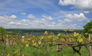Best Wines in the Finger Lakes | Best Wine Producers in the Finger Lakes NY | SommelierQA.com