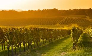 Left Bank Bordeaux Wines | Best Left Bank Bordeaux Producers Medoc / Haut-Medoc | Sommelier Sarah Trubnick | SommelierQA.com