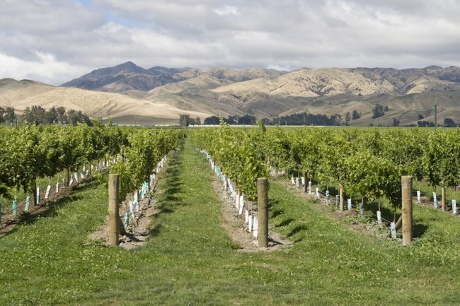 What is Marlborough Sauvignon Blanc? | Marlborough Wine Region | Marlborough Sauvignon Blanc Recommendations