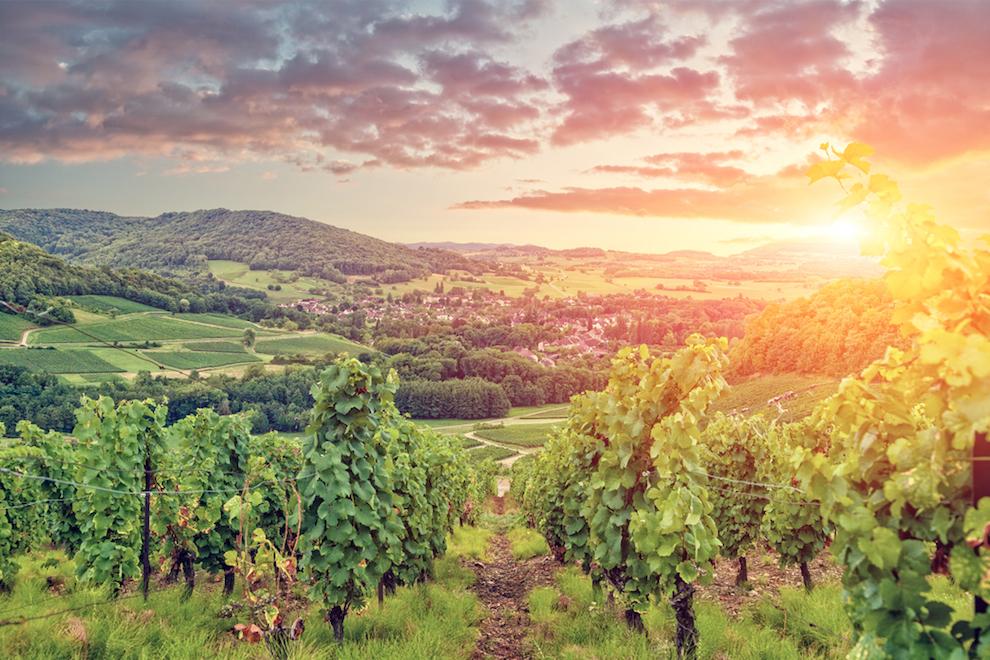 Background on Red Burgundy Wines and Burgundy Wine Region | Sarah Trubnick, Sommelier Barrel Room San Francisco | SommelierQA.com