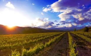 What is the Rioja Wine Region Known For?   Sommelier Q&A with Matt Deller, Master of Wine   SommerlierQA.com