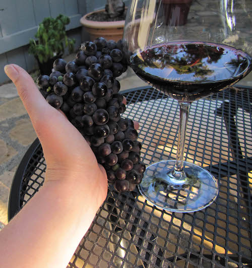 Winemaking 101 - Fully Ripened Grapes - The End Result