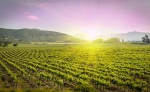 What is Carmenere Wine? What Does Carmenere Wine Taste Like? | SommelierQA.com