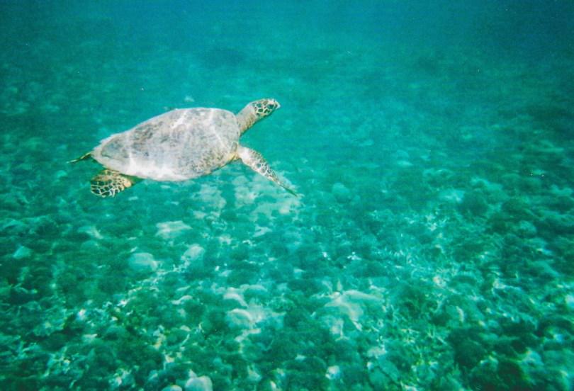 Gili-Inseln-Schildkröte