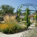 Jardin thérapeutiques
