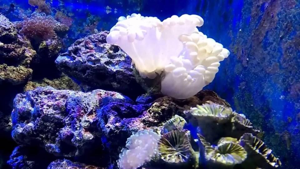 花蓮親子遊-海洋生態館