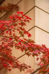 red-leaves exp