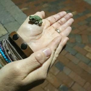 The day ended with a sweet froggy visit Not myhellip