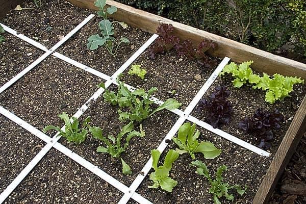 Raised Vegetable Garden How Build