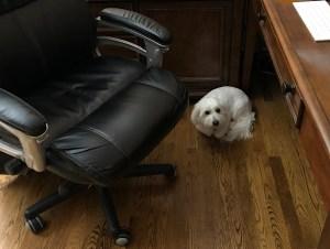 Hiding From Company