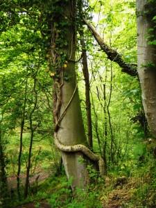 Rosslyn Chapel Trail