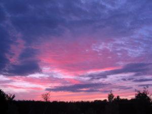 morningglow