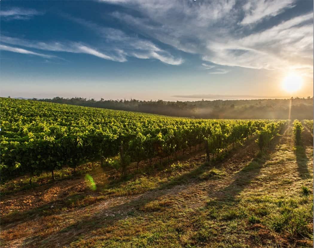 Bordeaux viaggi del gusto