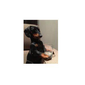 Hondeneet en drinkpotten