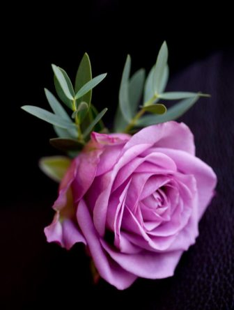 coolwater rose buttonhole