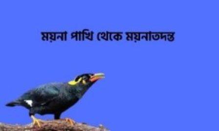 ময়নাতদন্ত
