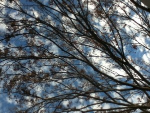 branchclouds