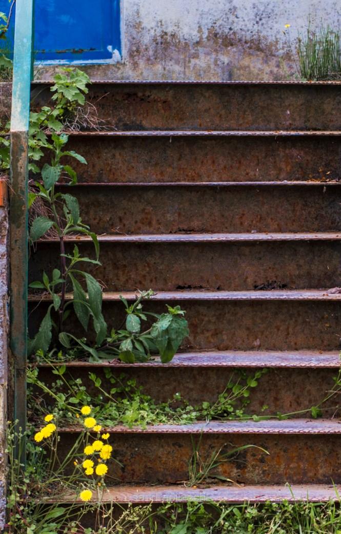 scale fiorite