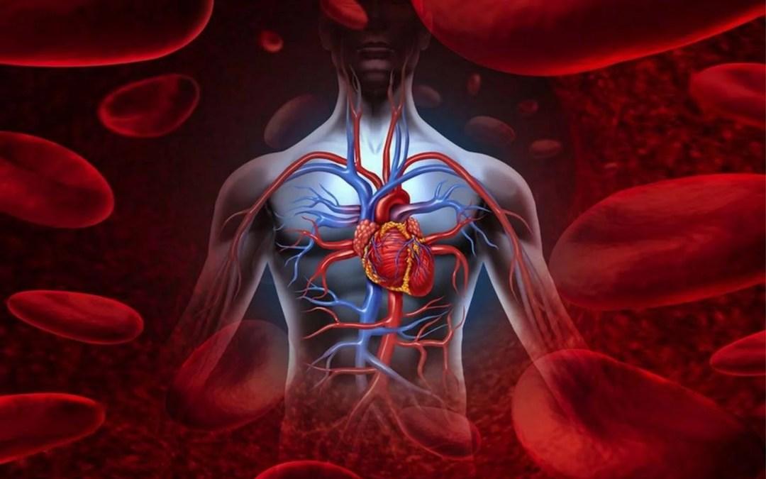 Sistema Circulatorio y Linfático | Fundación Sonría