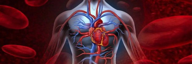 Sistema Circulatorio y Linfático