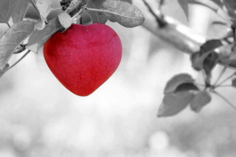 Pon el Corazón en los que Hagas