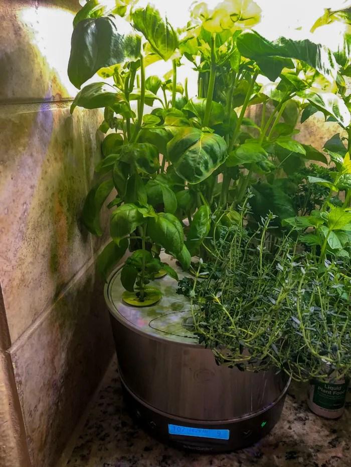 Stainless steel AeroGarden Harvest Elite 360 with herbs ready to harvest