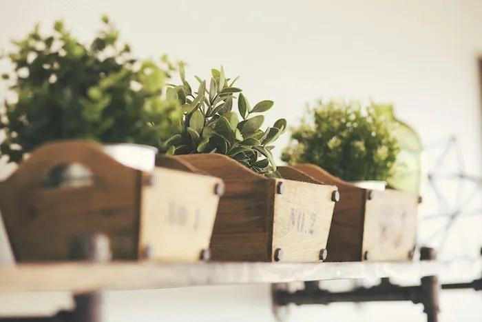 Indoor herb garden in wooden containers